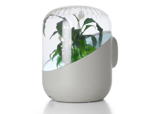 Andrea plant purifier air purifier reviews for Buy air purifying plants