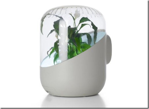 plant_air_purifier