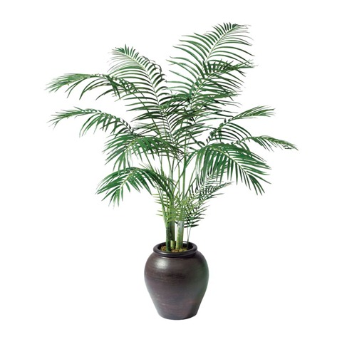 house plants tree