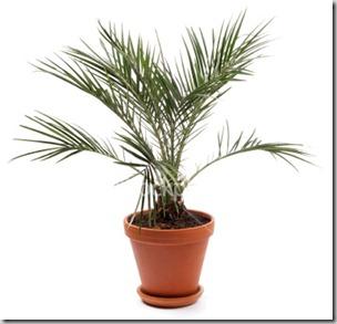 nasa air purifying house plants