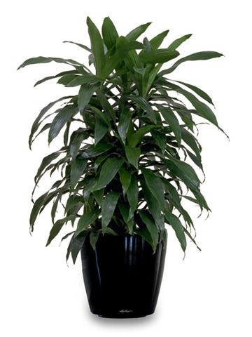 Our Homes And Air Purifying Plants Designbymilada