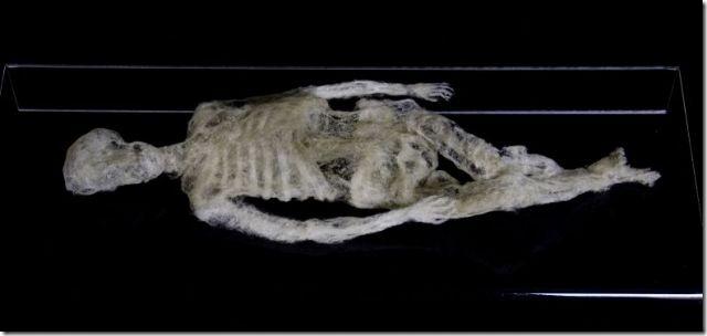 dust skeleton