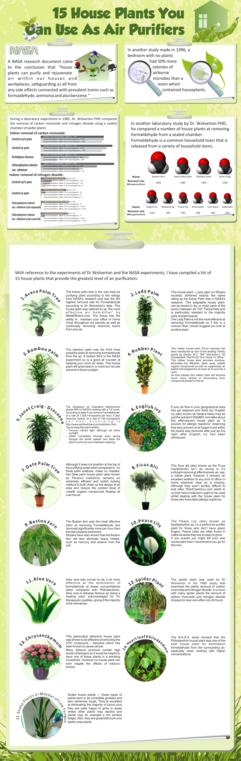 15 Houseplants You Can You As Air Purifiers | Air Purifier ...