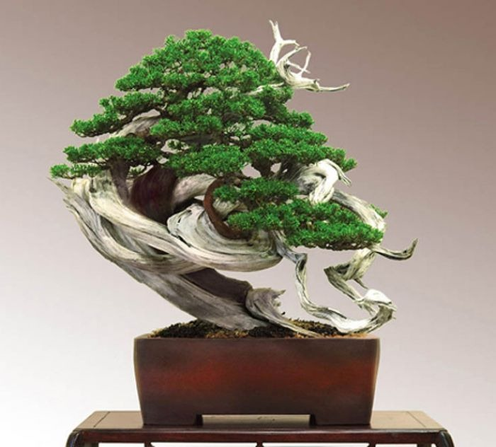15 Most Awesome Bonsai Trees On Earth Air Purifier Reviews