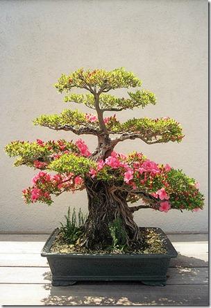 azaleea tree