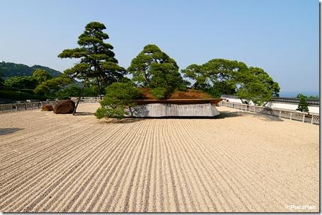 biggest bonsai tree