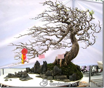 penjing-bonsai-exhibition-08