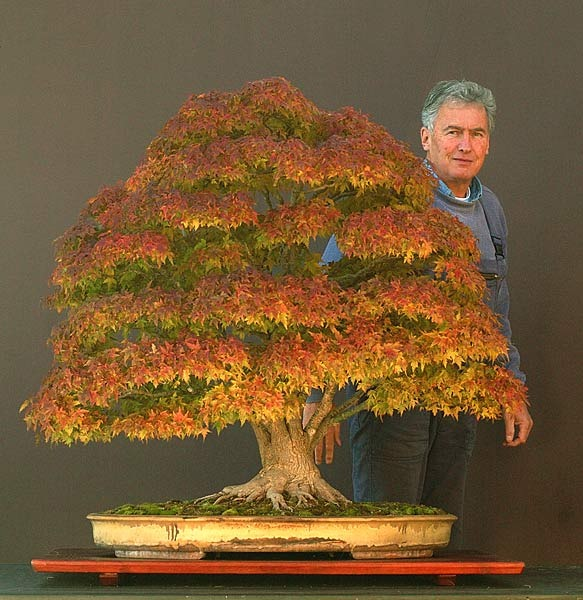15 most awesome bonsai trees on earth air purifier reviews for Famous bonsai trees