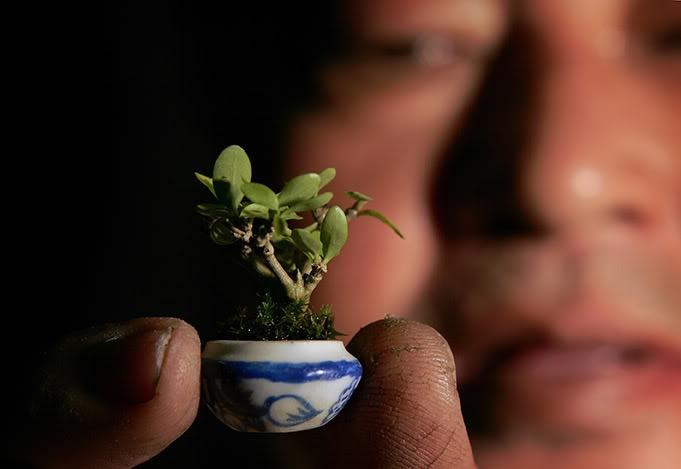 Pleasing 15 Most Awesome Bonsai Trees On Earth Air Purifier Reviews Wiring Cloud Ratagdienstapotheekhoekschewaardnl