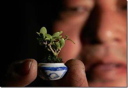 worlds smallest bonsai