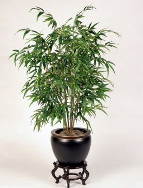 Effective Air Cleaning Plants Air Purifier Reviews